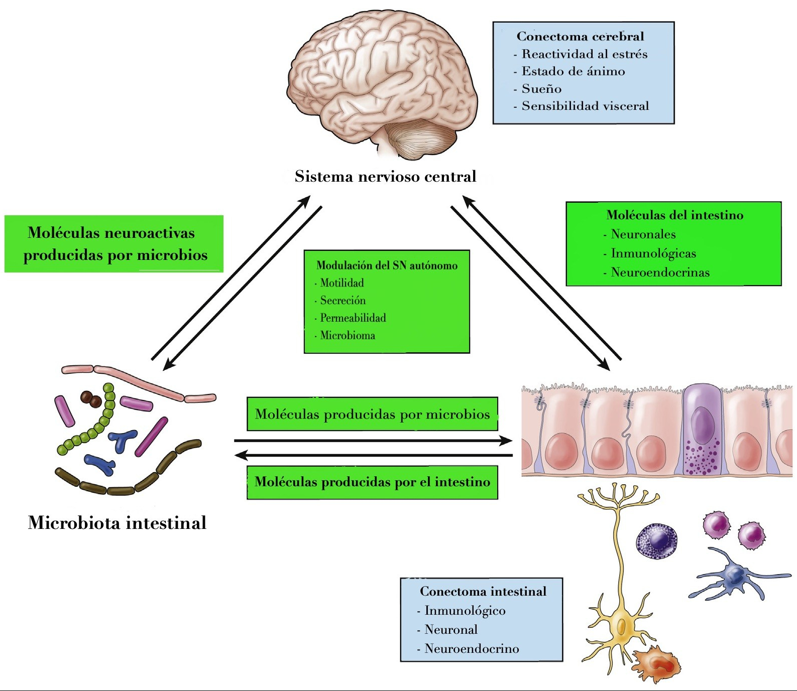 Eje microbiota-intestino-cerebro